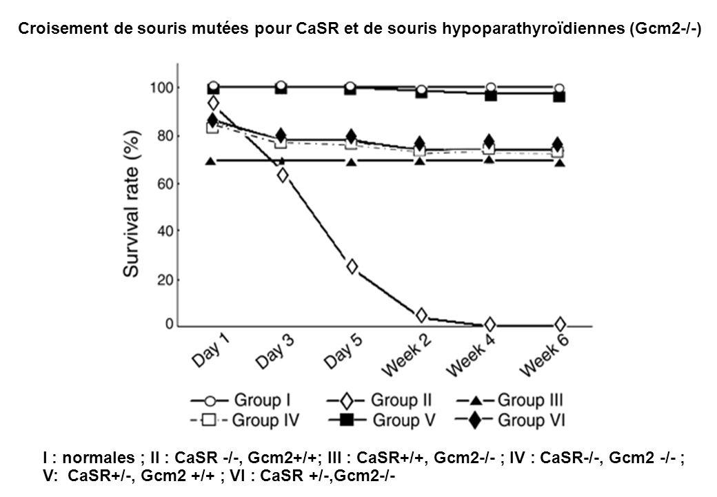 Croisement de souris mutées pour CaSR et de souris hypoparathyroïdiennes (Gcm2-/-) I : normales ; II : CaSR -/-, Gcm2+/+; III : CaSR+/+, Gcm2-/- ; IV