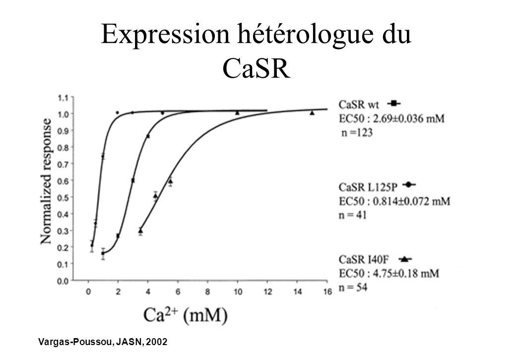 Expression hétérologue du CaSR Vargas-Poussou, JASN, 2002
