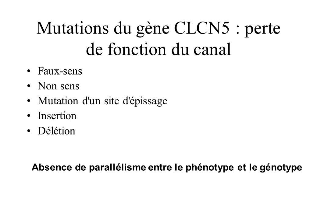 Mutations du gène CLCN5 : perte de fonction du canal Faux-sens Non sens Mutation d'un site d'épissage Insertion Délétion Absence de parallélisme entre