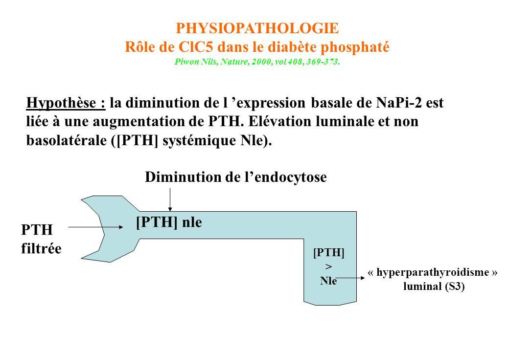 PHYSIOPATHOLOGIE Rôle de ClC5 dans le diabète phosphaté Piwon Nils, Nature, 2000, vol 408, 369-373. Hypothèse : la diminution de l expression basale d