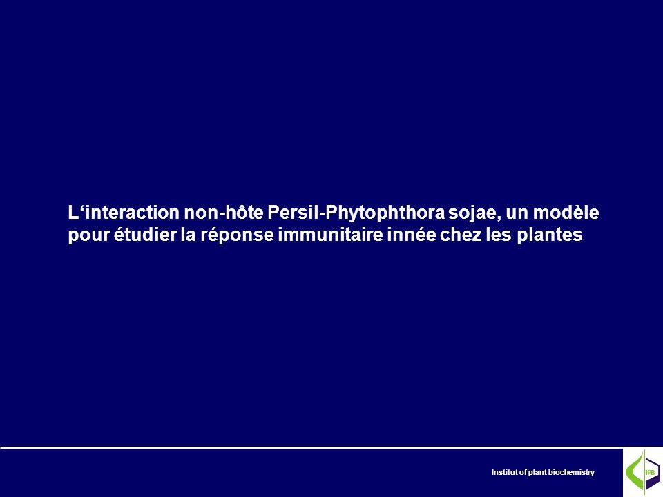 Institut of plant biochemistry Linteraction non-hôte Persil-Phytophthora sojae, un modèle pour étudier la réponse immunitaire innée chez les plantes