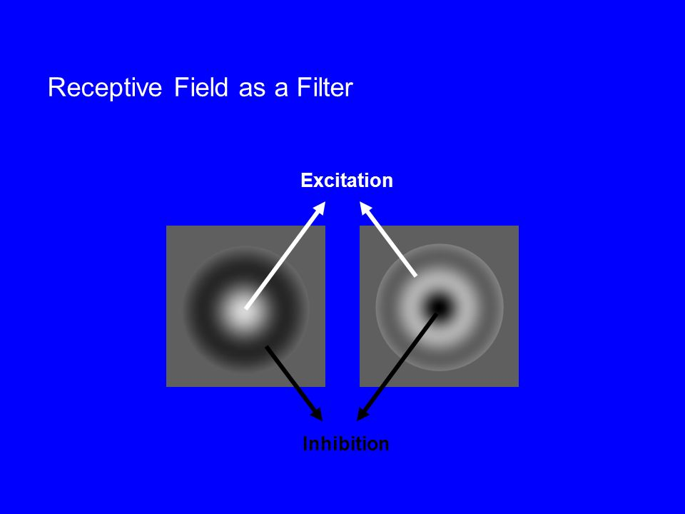 Receptive Field as a Filter Excitation Inhibition
