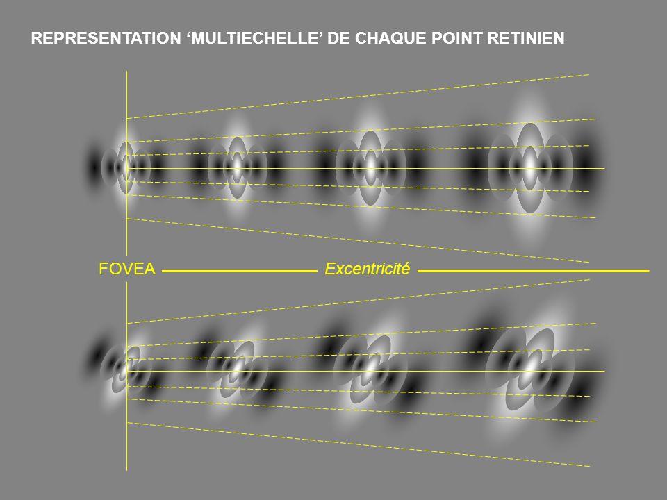 REPRESENTATION MULTIECHELLE DE CHAQUE POINT RETINIEN FOVEAExcentricité