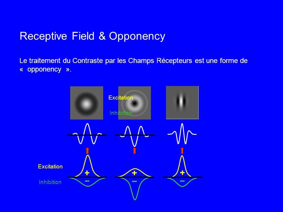 Receptive Field & Opponency Le traitement du Contraste par les Champs Récepteurs est une forme de « opponency ».