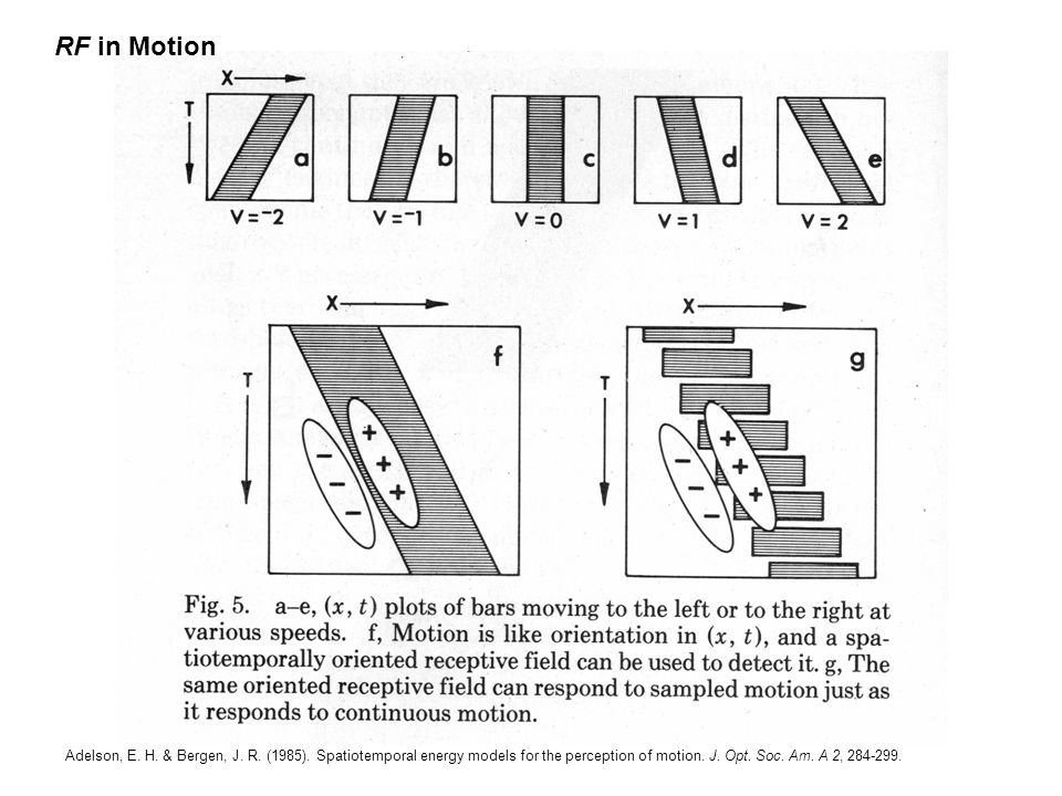 Adelson, E. H. & Bergen, J. R. (1985).