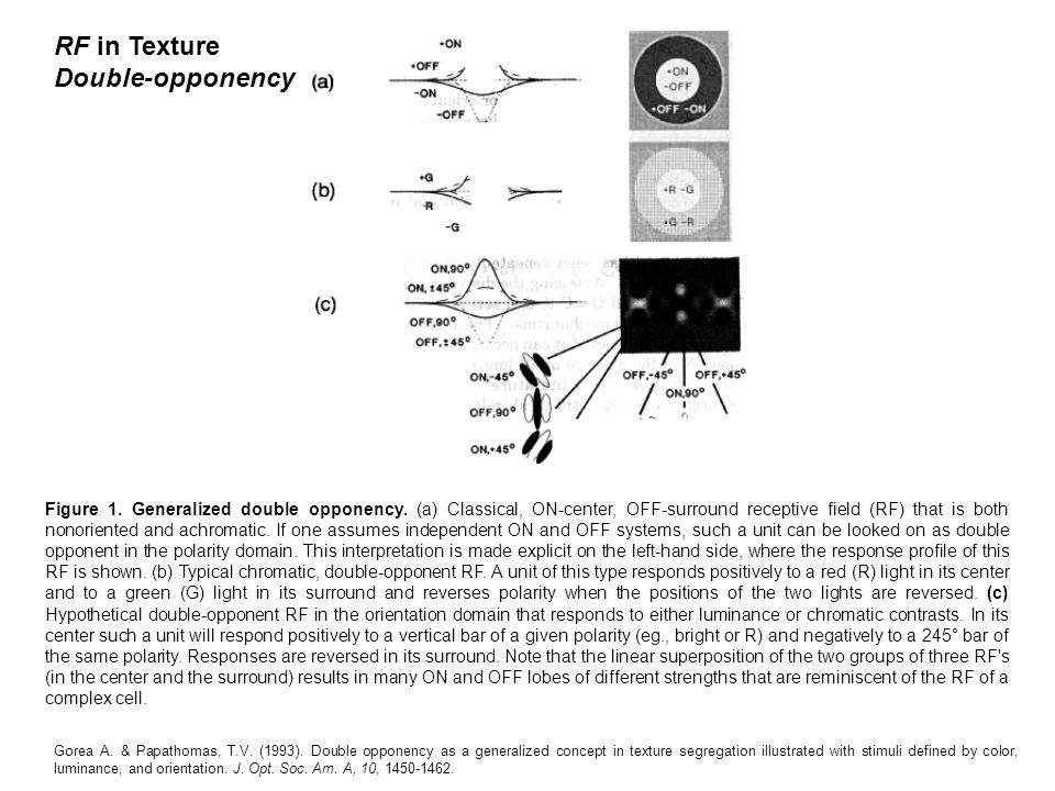 RF in Texture Double-opponency Figure 1. Generalized double opponency.