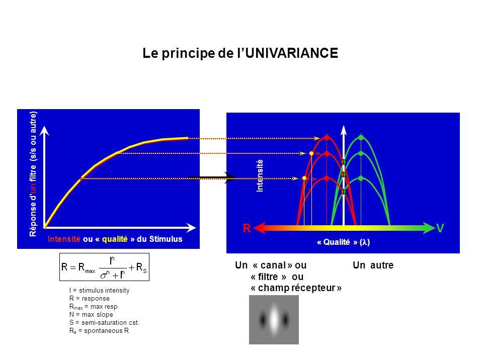 « Qualité » ( ) Intensité Intensité ou « qualité » du Stimulus Réponse dun filtre (s/s ou autre) Le principe de lUNIVARIANCE Un « canal » ou « filtre » ou « champ récepteur » Un autre RV I = stimulus intensity R = response R max = max resp.