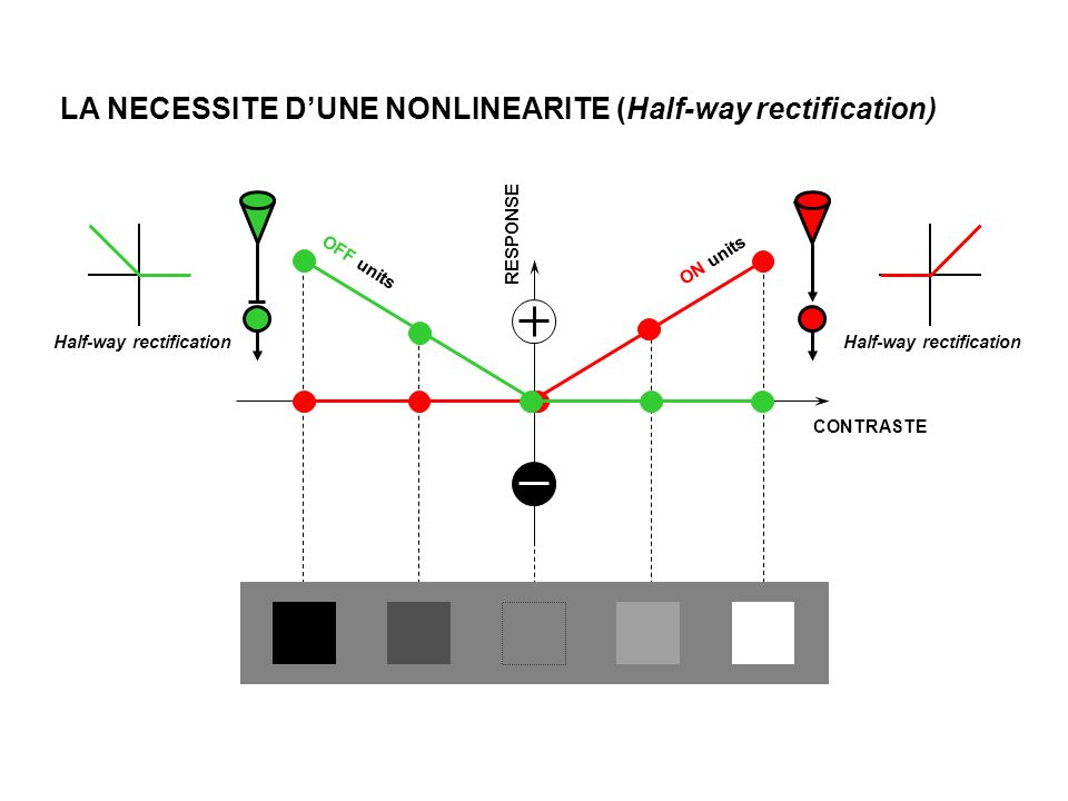 RESPONSE CONTRASTE ON units OFF units LA NECESSITE DUNE NONLINEARITE (Half-way rectification) Half-way rectification