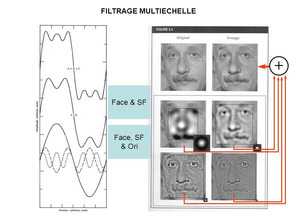 FILTRAGE MULTIECHELLE Face & SF Face, SF & Ori