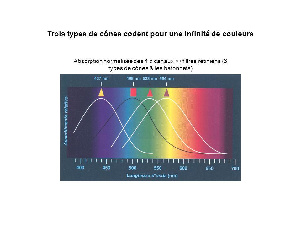 Trois types de cônes codent pour une infinité de couleurs Absorption normalisée des 4 « canaux » / filtres rétiniens (3 types de cônes & les batonnets)