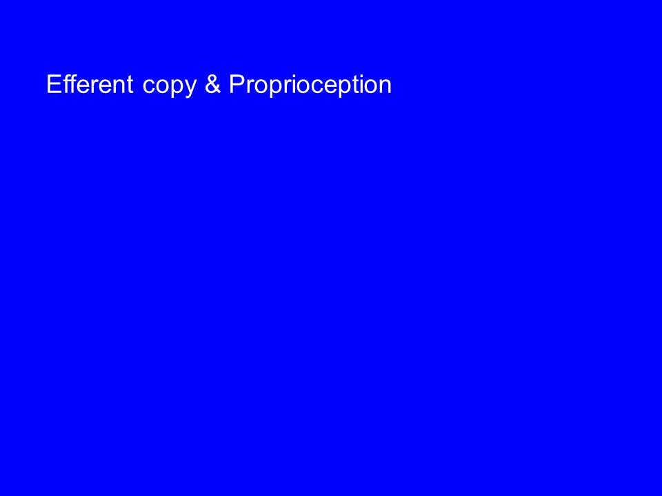 Efferent copy & Proprioception