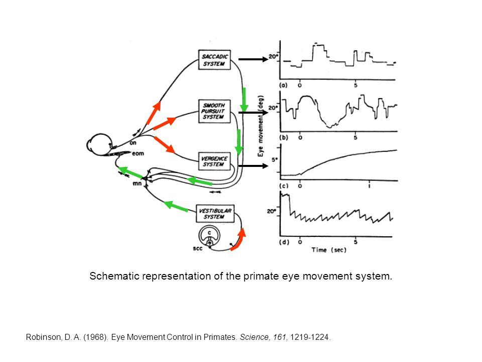 Robinson, D. A. (1968). Eye Movement Control in Primates.