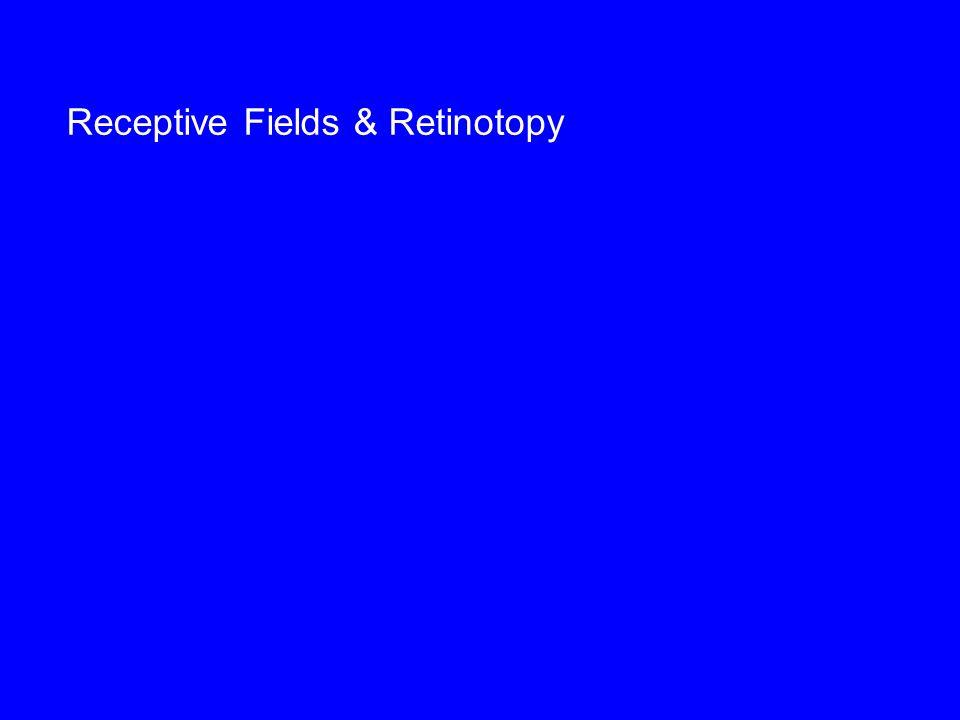 Receptive Fields & Retinotopy