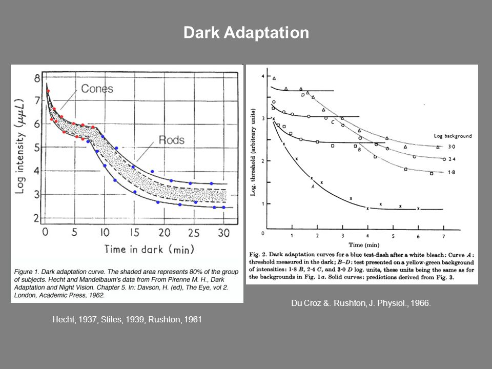 Dark Adaptation Du Croz &. Rushton, J. Physiol., 1966. Hecht, 1937; Stiles, 1939; Rushton, 1961