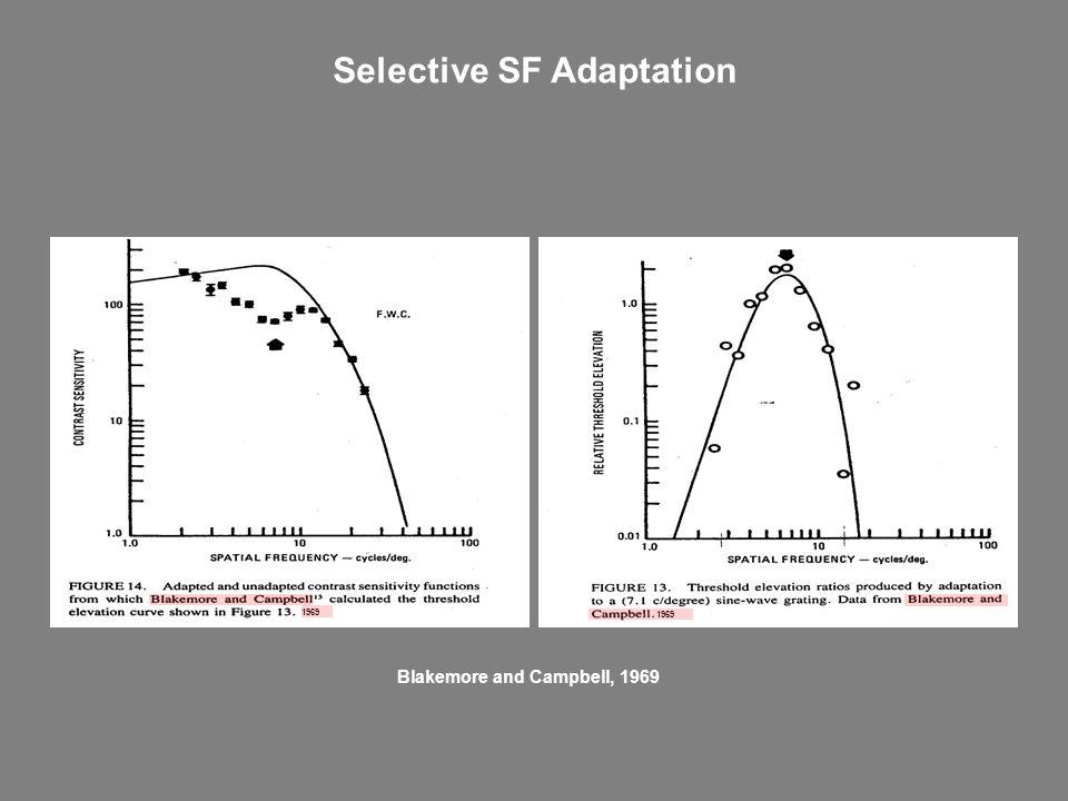 Selective SF Adaptation 1969 Blakemore and Campbell, 1969
