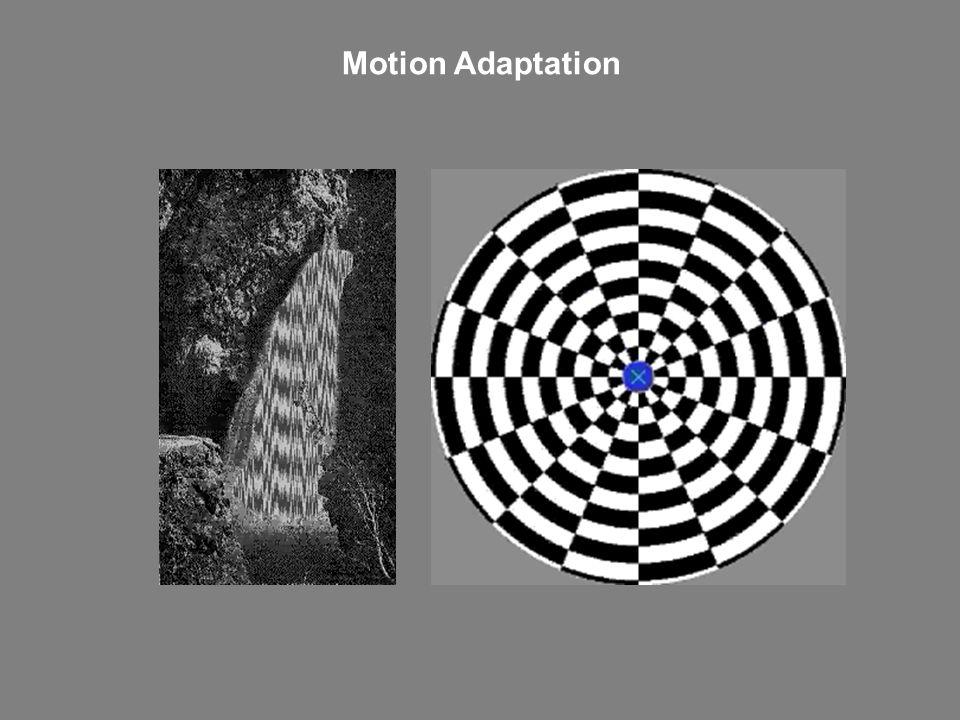 Motion Adaptation
