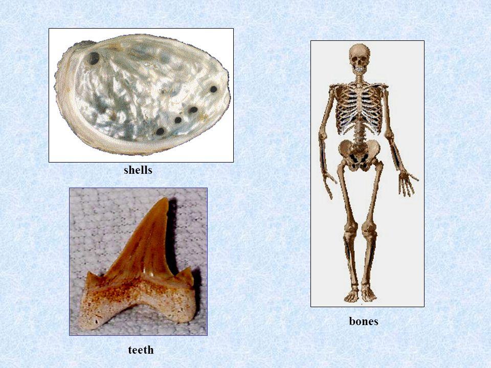 bones teeth shells