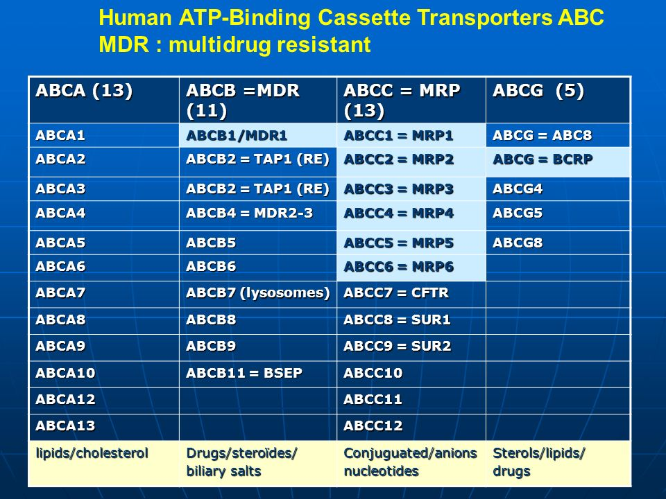 ABCA (13) ABCB =MDR (11) ABCC = MRP (13) ABCG (5) ABCA1ABCB1/MDR1 ABCC1 = MRP1 ABCG = ABC8 ABCA2 ABCB2 = TAP1 (RE) ABCC2 = MRP2 ABCG = BCRP ABCA3 ABCB2 = TAP1 (RE) ABCC3 = MRP3 ABCG4 ABCA4 ABCB4 = MDR2-3 ABCC4 = MRP4 ABCG5 ABCA5ABCB5 ABCC5 = MRP5 ABCG8 ABCA6ABCB6 ABCC6 = MRP6 ABCA7 ABCB7 (lysosomes) ABCC7 = CFTR ABCA8ABCB8 ABCC8 = SUR1 ABCA9ABCB9 ABCC9 = SUR2 ABCA10 ABCB11 = BSEP ABCC10 ABCA12ABCC11 ABCA13ABCC12 lipids/cholesterolDrugs/steroïdes/ biliary salts Conjuguated/anionsnucleotidesSterols/lipids/drugs Human ATP-Binding Cassette Transporters ABC MDR : multidrug resistant