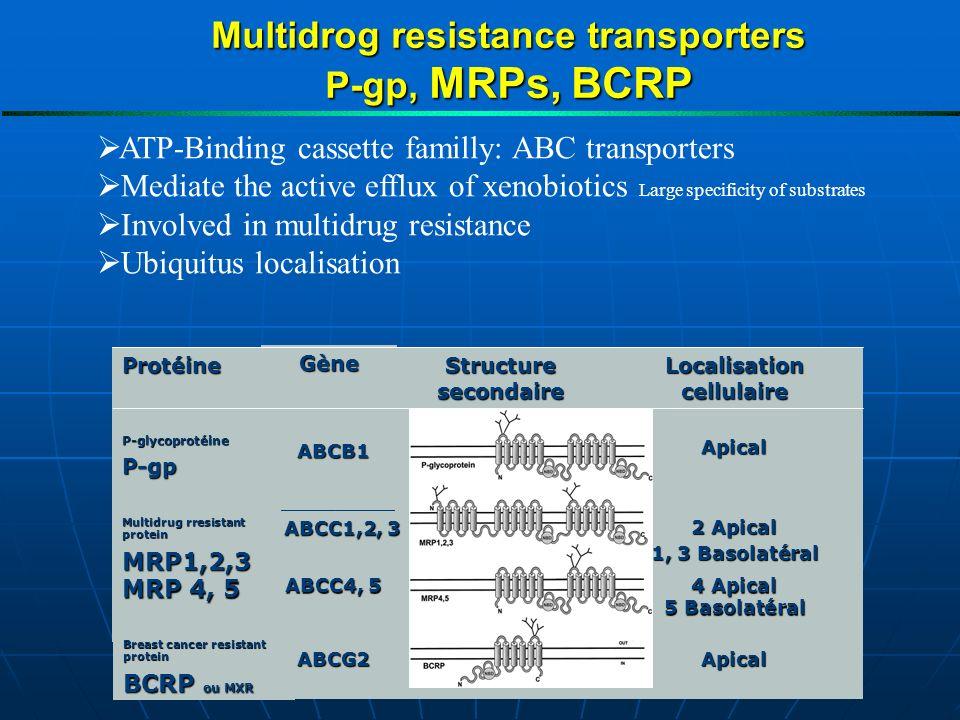 Multidrog resistance transporters P-gp, MRPs, BCRP ATP-Binding cassette familly: ABC transporters Mediate the active efflux of xenobiotics Large specificity of substrates Involved in multidrug resistance Ubiquitus localisation ApicalABCG2 4 Apical 5 Basolatéral ABCC4, 5 MRP 4, 5 2 Apical 1, 3 Basolatéral ABCC1,2, 3 Multidrug rresistant protein MRP1,2,3 ApicalABCB1 P-glycoprotéineP-gp Localisation cellulaire Structure secondaire Gène Protéine Breast cancer resistant protein BCRP ou MXR
