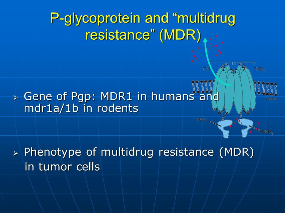 P-glycoprotein and multidrug resistance (MDR) Gene of Pgp: MDR1 in humans and mdr1a/1b in rodents Gene of Pgp: MDR1 in humans and mdr1a/1b in rodents Phenotype of multidrug resistance (MDR) Phenotype of multidrug resistance (MDR) in tumor cells in tumor cells