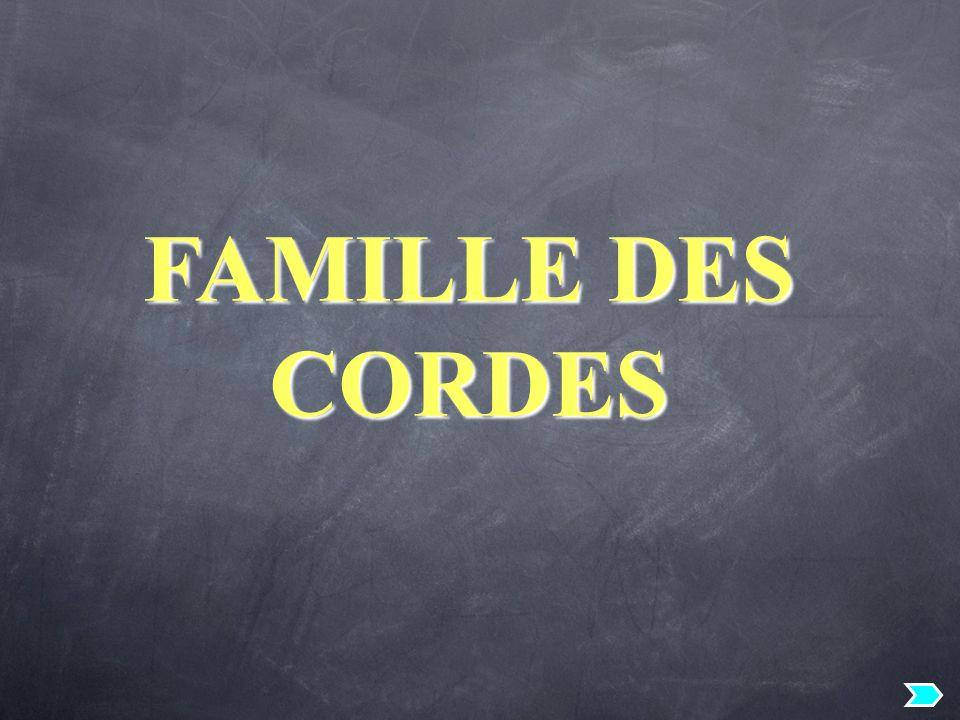 FAMILLE DES CORDES