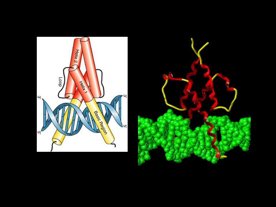 Receiving cell Notch Extracellular P2: TACE/Kuzbanian Delta 2.