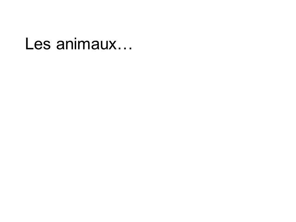Les animaux…