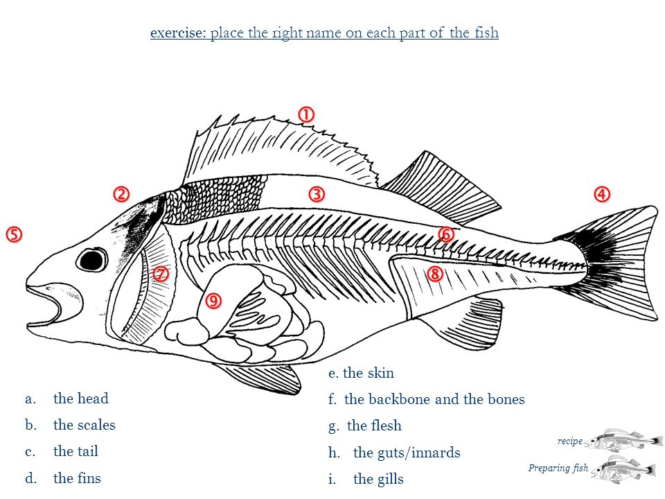 … … exercise: place the right name on each part of the fish a. the head b. the scales c. the tail d. the fins e. the skin f. the backbone and the bone