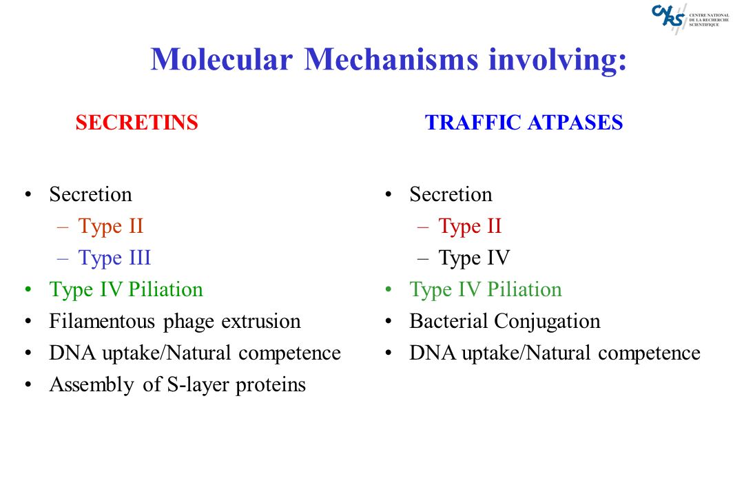 Molecular Mechanisms involving: Secretion –Type II –Type III Type IV Piliation Filamentous phage extrusion DNA uptake/Natural competence Assembly of S