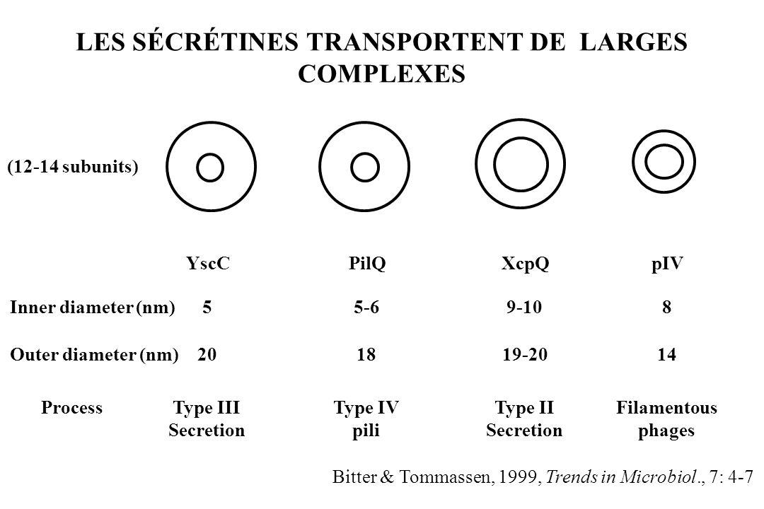 LES SÉCRÉTINES TRANSPORTENT DE LARGES COMPLEXES YscCPilQXcpQpIV 55-69-108 201819-2014 Type III Secretion Type IV pili Type II Secretion Filamentous ph