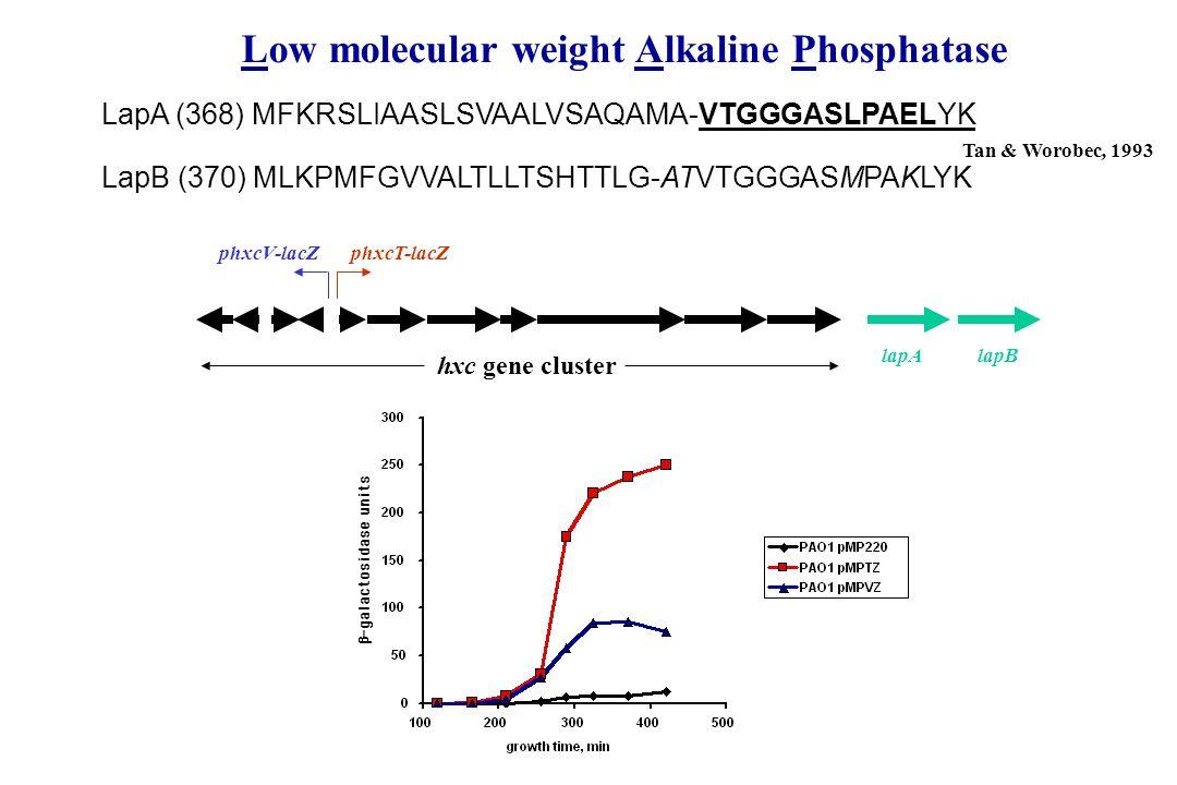 phxcV-lacZphxcT-lacZ LapA (368) MFKRSLIAASLSVAALVSAQAMA-VTGGGASLPAELYK lapB LapB (370) MLKPMFGVVALTLLTSHTTLG-ATVTGGGASMPAKLYK lapA hxc gene cluster Ta