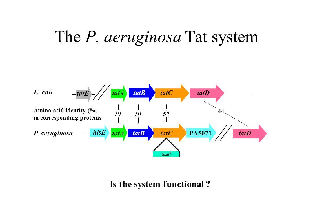 The P. aeruginosa Tat system E. coli P. aeruginosa Amino acid identity (%) in corresponding proteins 3930 44 57 tatA tatC hisE tatD tatE tatD tatB PA5
