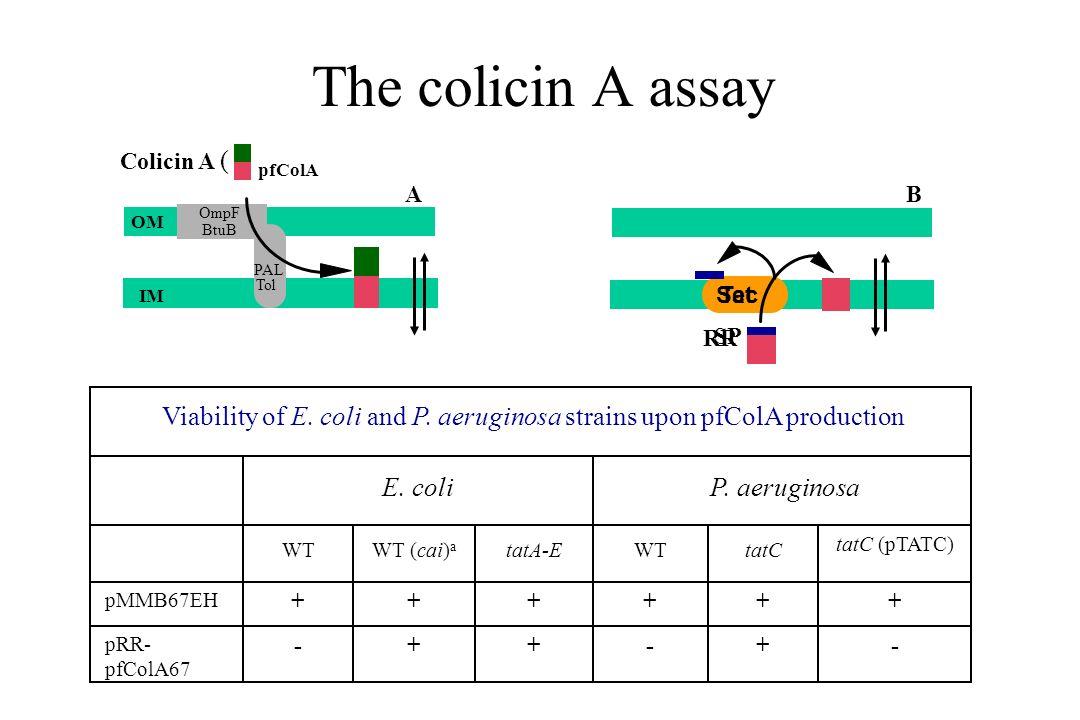 The colicin A assay OM IM OmpF BtuB PAL Tol pfColA Colicin A ( A B Viability of E. coli and P. aeruginosa strains upon pfColA production E. coli P. ae