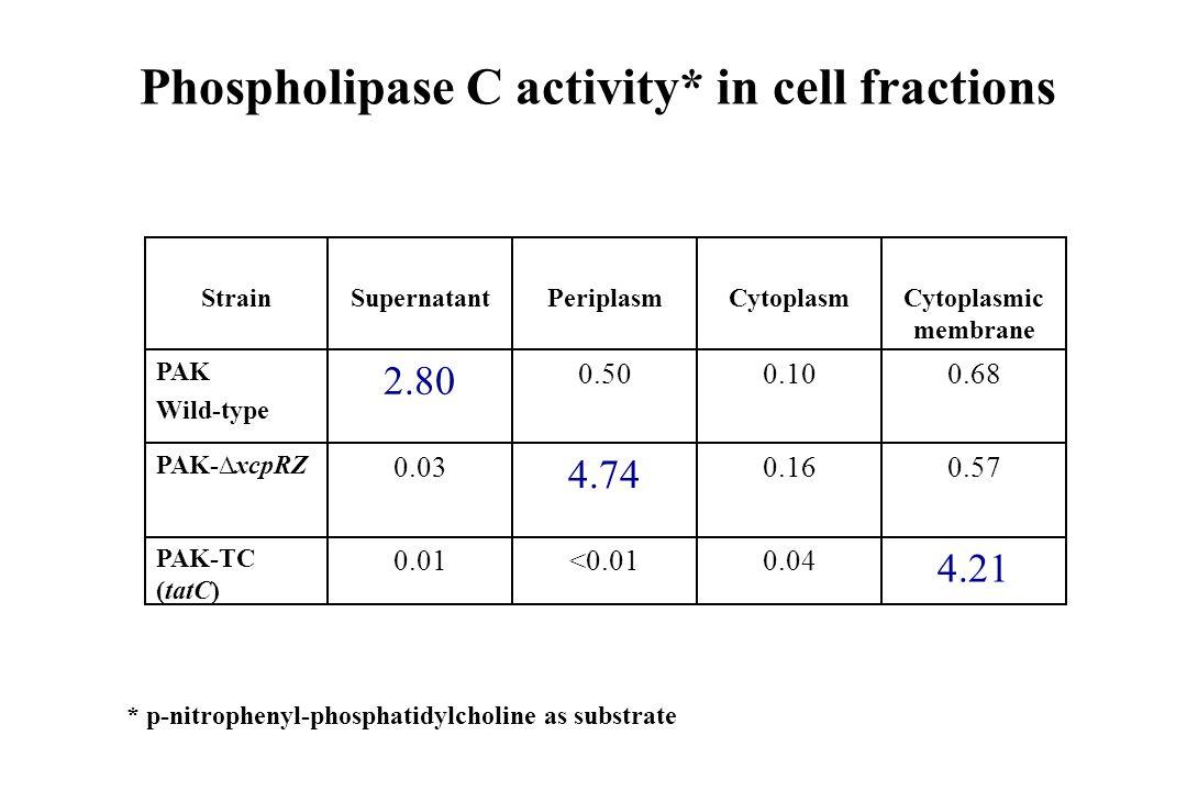 Phospholipase C activity* in cell fractions 4.21 0.57 0.68 Cytoplasmic membrane 0.04<0.010.01 PAK-TC (tatC) 0.16 4.74 0.03 PAK-xcpRZ 0.100.50 2.80 PAK