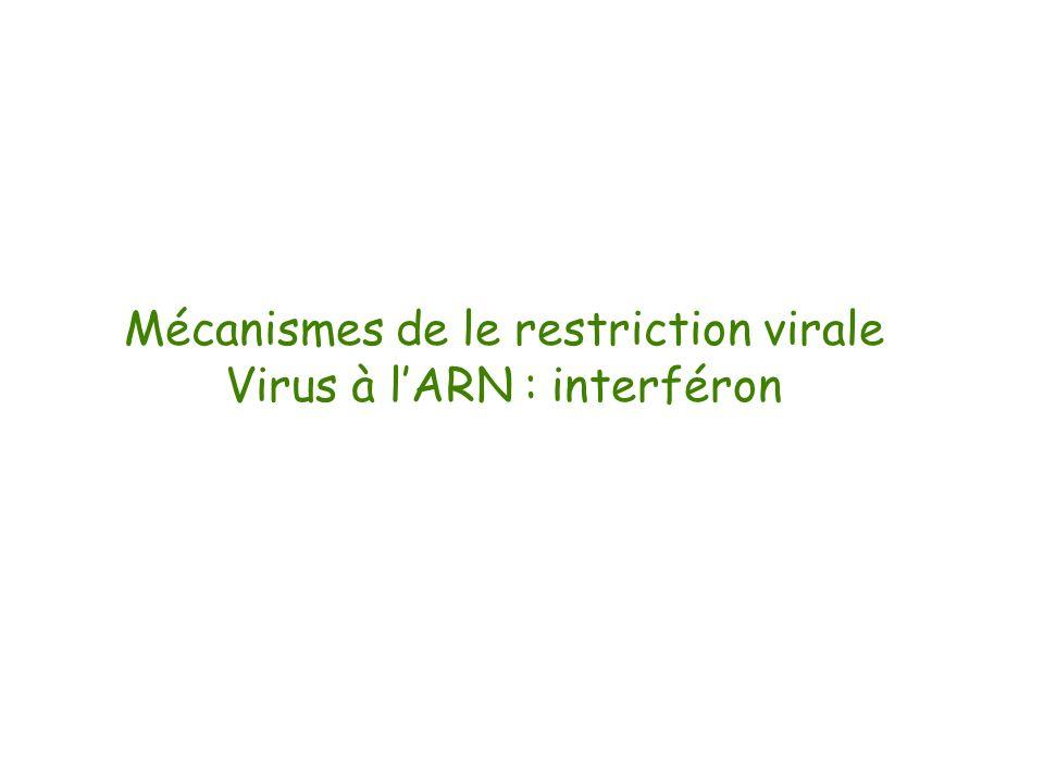 Mécanismes de le restriction virale Virus à lARN : interféron
