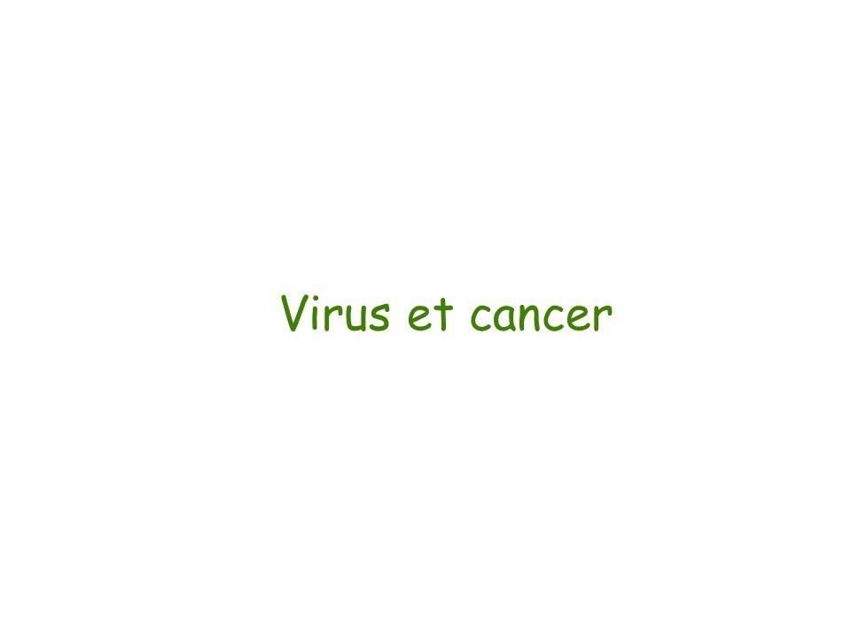 Virus et cancer