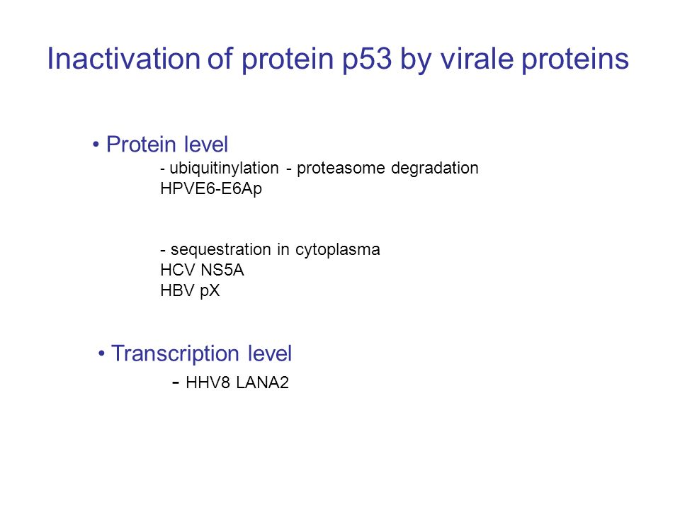 Inactivation of protein p53 by virale proteins Protein level - ubiquitinylation - proteasome degradation HPVE6-E6Ap - sequestration in cytoplasma HCV