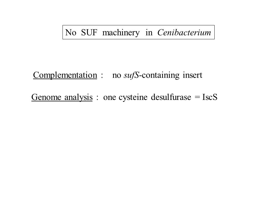 No SUF machinery in Cenibacterium Complementation : no sufS-containing insert Genome analysis : one cysteine desulfurase = IscS