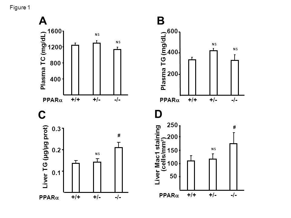 Figure 1 AB 0.1 0.2 0.3 Liver TG (µg/µg prot) PPAR # C 50 100 150 200 Liver Mac1 staining (cells/mm²) +/++/--/- PPAR D NS Plasma TG (mg/dL) +/++/--/- PPAR 200 400 600 Plasma TC (mg/dL) +/++/--/- PPAR 400 800 1200 1600 NS +/++/--/- # NS 250