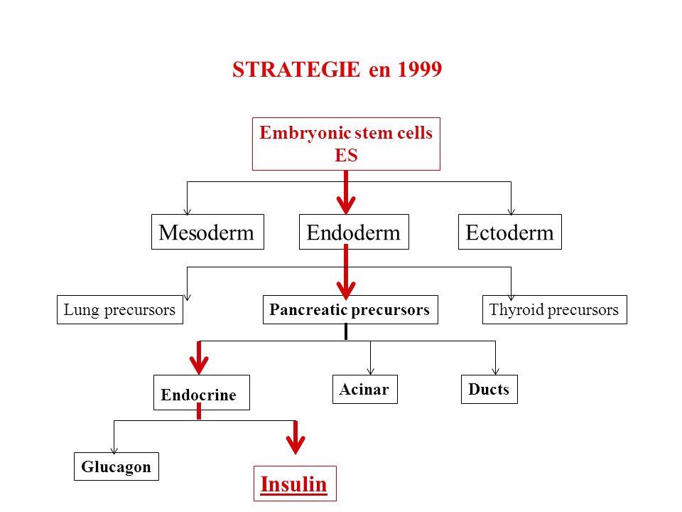 STRATEGIE en 1999 Embryonic stem cells ES MesodermEndodermEctoderm Lung precursorsPancreatic precursorsThyroid precursors Endocrine Acinar Insulin Glucagon Ducts