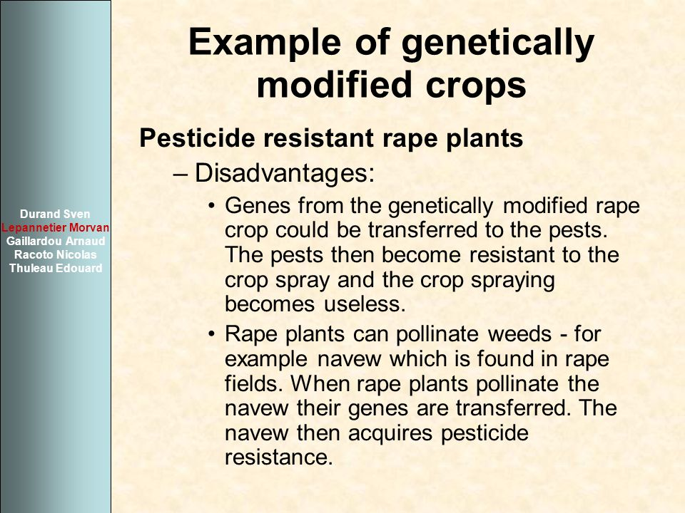 Example of genetically modified crops Pesticide resistant rape plants –Disadvantages: Genes from the genetically modified rape crop could be transferr