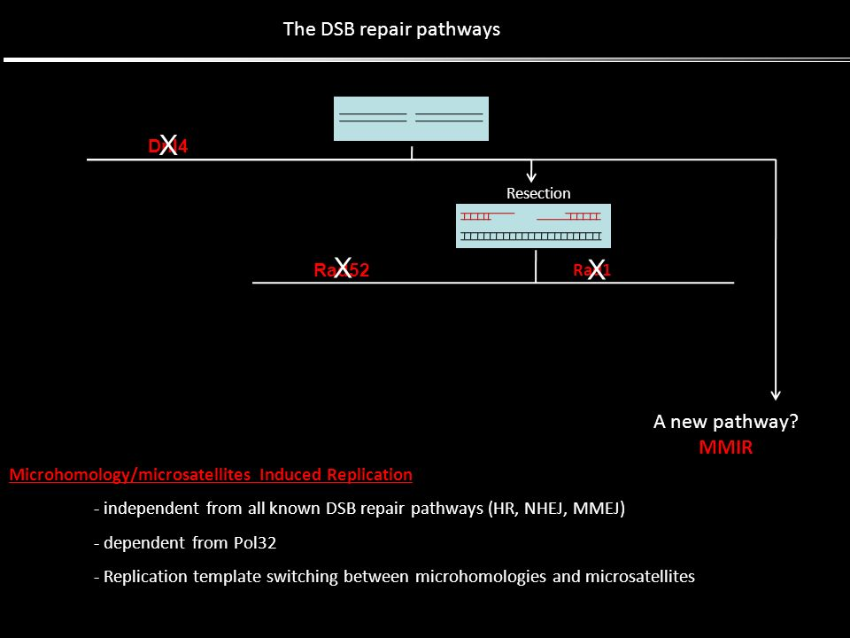Dnl4 Resection Rad52 Rad1 The DSB repair pathways X X X A new pathway? MMIR Microhomology/microsatellites Induced Replication - independent from all k