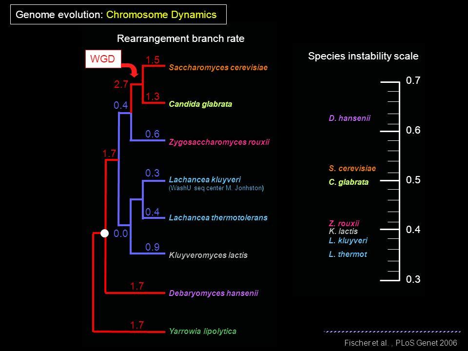 Yarrowia lipolytica Saccharomyces cerevisiae Candida glabrata Lachancea kluyveri (WashU seq center M. Jonhston) Debaryomyces hansenii Kluyveromyces la