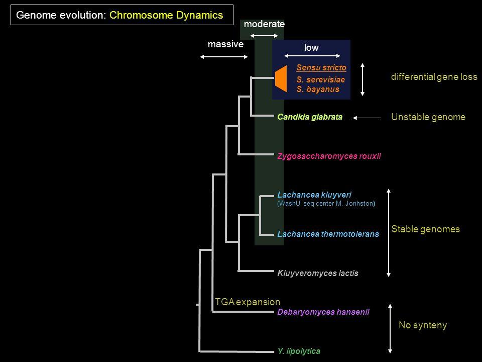 Y. lipolytica S. serevisiae S. bayanus Candida glabrata Lachancea kluyveri (WashU seq center M. Jonhston) Debaryomyces hansenii Kluyveromyces lactis L