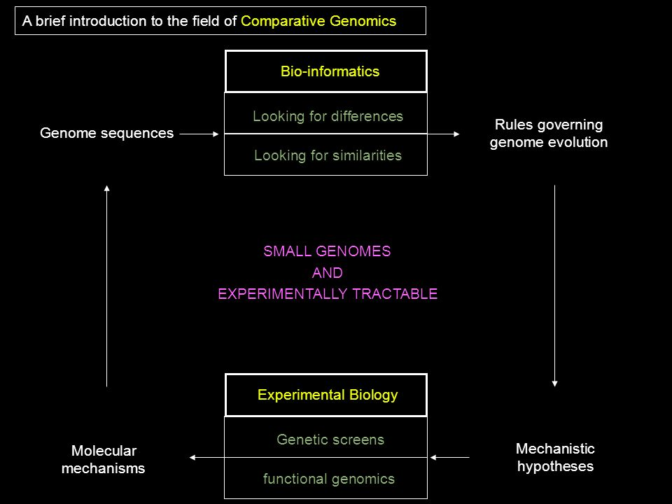Looking for differences Looking for similarities A brief introduction to the field of Comparative Genomics Genome sequences Bio-informatics Rules gove