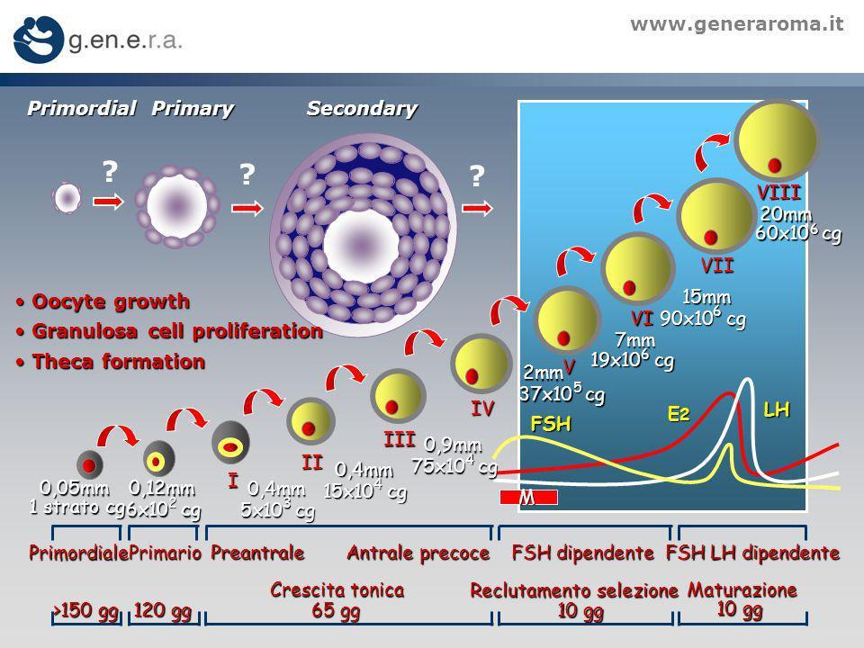 www.generaroma.it FSH LH E2E2E2E2 Primordiale PrimarioPreantrale Antrale precoce FSH dipendente FSH LH dipendente Reclutamento selezione 10 gg Maturazione Crescita tonica 65 gg 120 gg >150 gg 0,12mm 6x10 cg 2 1 strato cg 0,4mm 5x10 cg 3 I 0,4mm 15x10 cg 4 II III IV 0,05mm 0,9mm 75x10 cg 4 2mm 2mm 37x10 cg 5 V 7mm 6 19x10 cg VI VII VIII 15mm 90x10 cg 6 20mm 60x10 cg 6 M PrimordialPrimarySecondary Oocyte growth Oocyte growth Granulosa cell proliferation Granulosa cell proliferation Theca formation Theca formation .