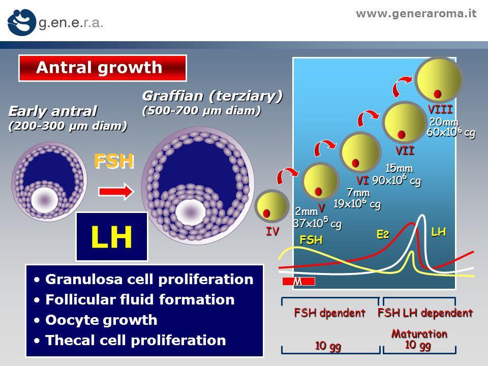 www.generaroma.it FSH LH E2E2E2E2 FSH dpendent FSH LH dependent 10 gg Maturation 2mm 2mm 37x10 cg 5 V 7mm 6 19x10 cg VI VII VIII 15mm 90x10 cg 6 20mm 60x10 cg 6 M IV FSH Antral growth Graffian (terziary) (500-700 µm diam) Granulosa cell proliferation Follicular fluid formation Oocyte growth Thecal cell proliferation Early antral (200-300 µm diam) LH
