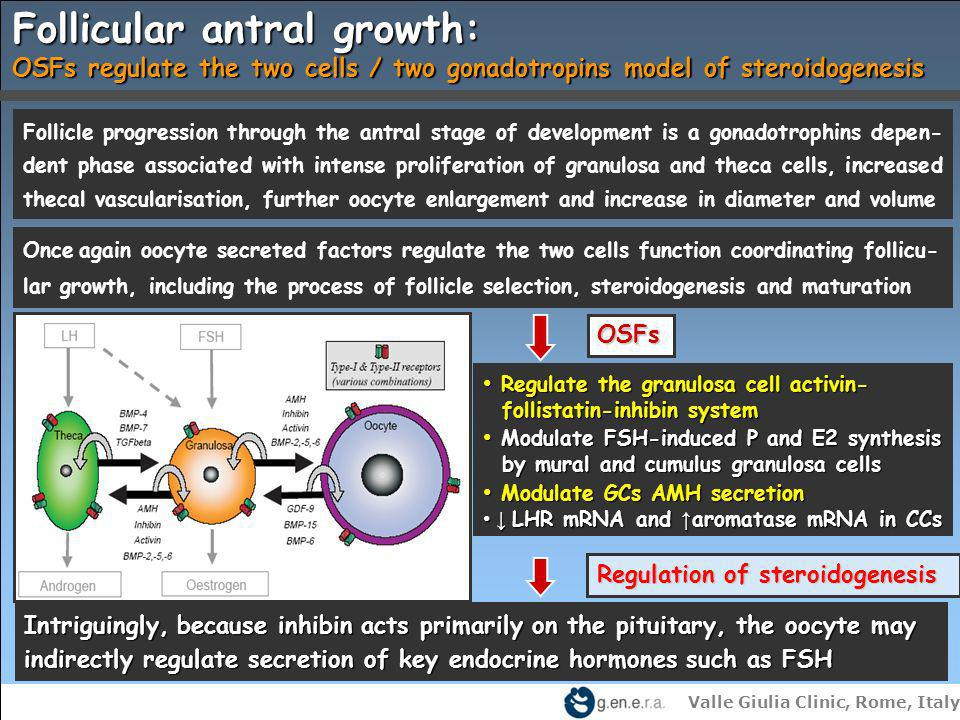 Valle Giulia Clinic, Rome, Italy Follicular antral growth: OSFs regulate the two cells / two gonadotropins model of steroidogenesis OSFs Regulation of