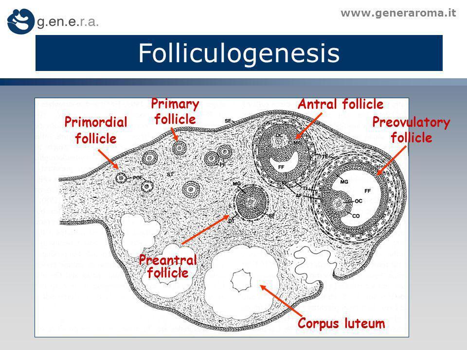 Folliculogenesis www.generaroma.it Primordial follicle Primary follicle Preantral follicle Antral follicle Preovulatory follicle Corpus luteum
