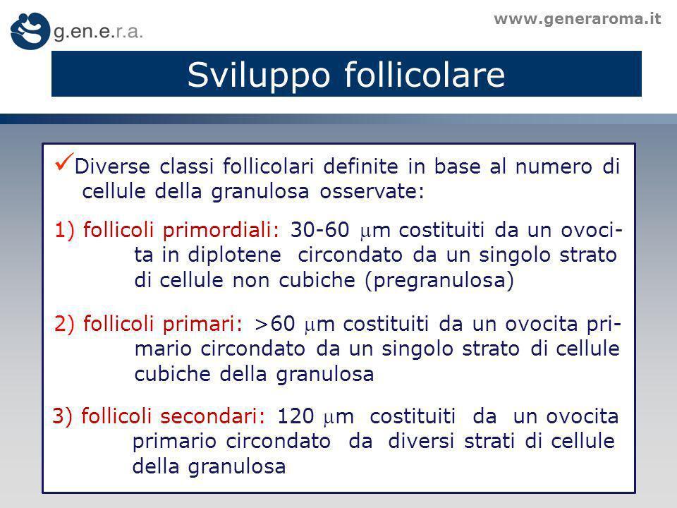 Sviluppo follicolare www.generaroma.it Diverse classi follicolari definite in base al numero di cellule della granulosa osservate: 1) follicoli primordiali: 30-60 m costituiti da un ovoci- ta in diplotene circondato da un singolo strato di cellule non cubiche (pregranulosa) 2) follicoli primari: >60 m costituiti da un ovocita pri- mario circondato da un singolo strato di cellule cubiche della granulosa 3) follicoli secondari: 120 m costituiti da un ovocita primario circondato da diversi strati di cellule della granulosa